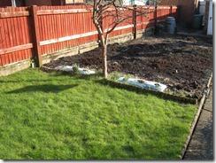 11 February 2012 - Garden - 003