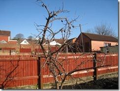 11 February 2012 - Garden - 006